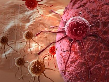 Broccoli & Breast Cancer Cells